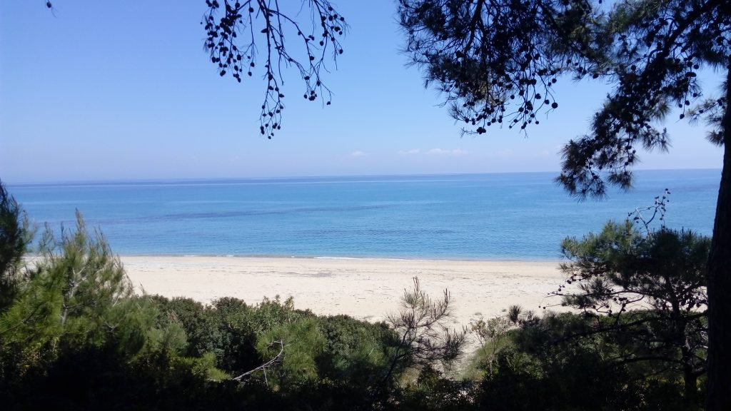 Skala beach through pine trees