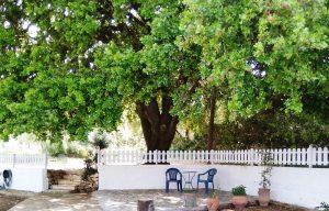 Schattiger Platz unter der Eiche von Joleni Cottage