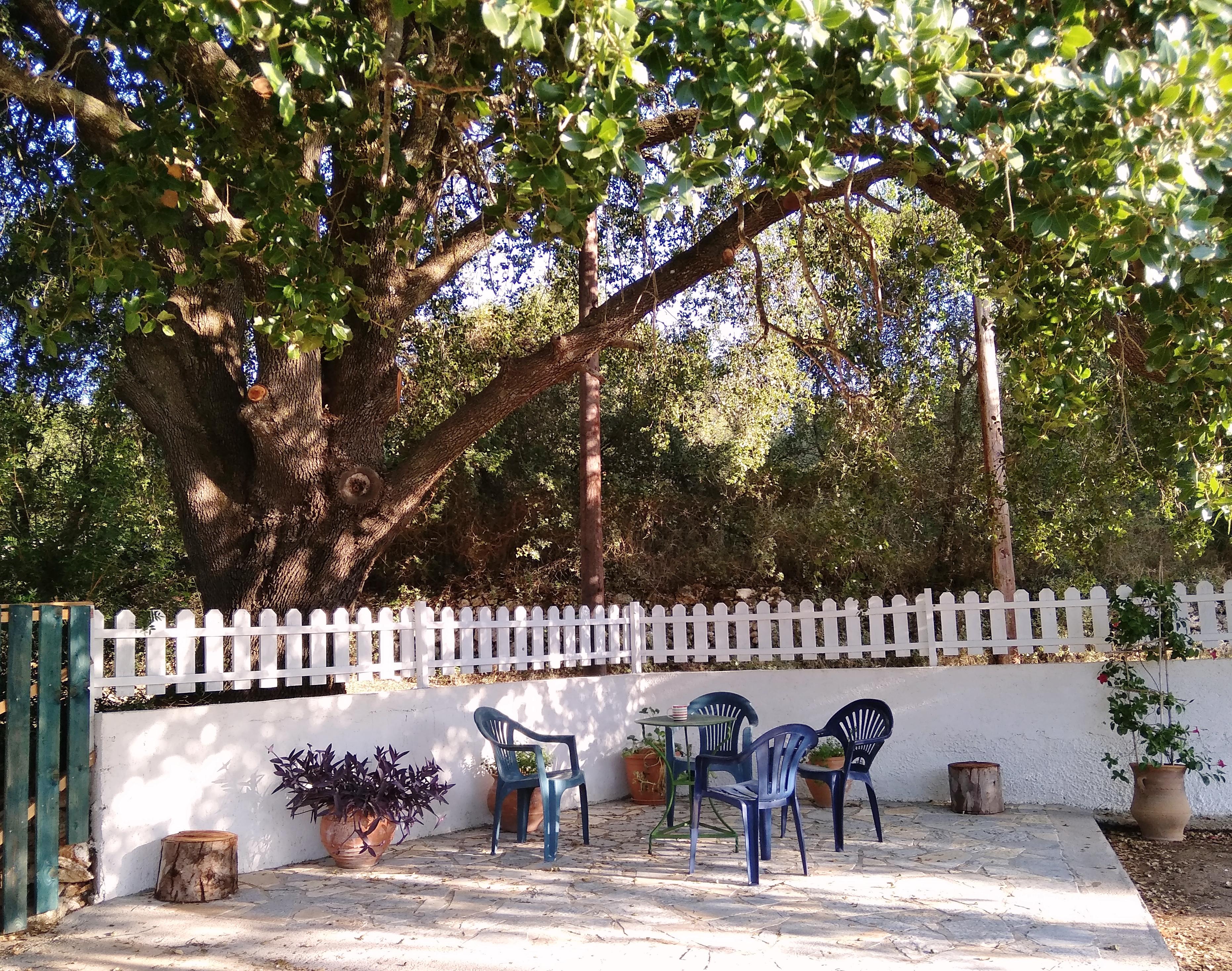 Alte Eiche von Joleni Cottage Kefalonia