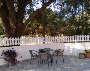 Oak tree of Joleni Cottage Kefalonia