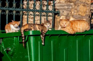 Katzen auf Kefalonia Griechenland